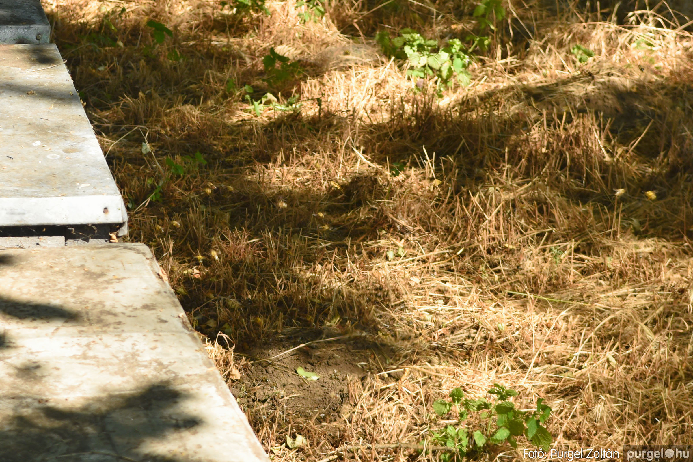 2021.07.08. 008 Gyenes Béla méhészetében - Fotó:PURGEL ZOLTÁN© DSC_8089q.jpg