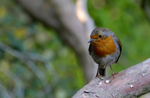 Weihnachtsvogel / Christmas Bird.