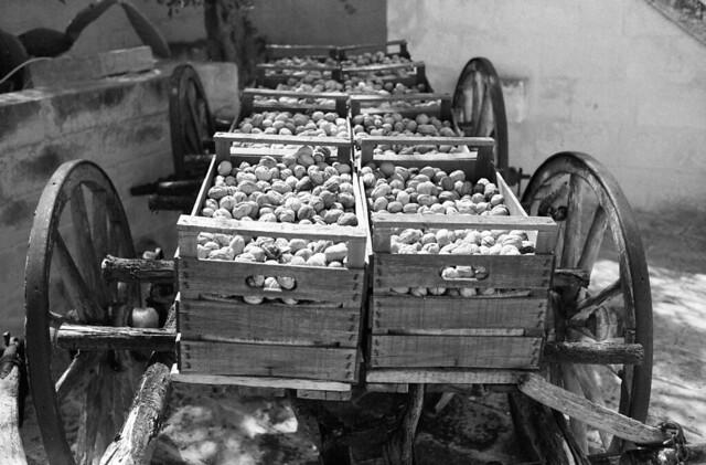 Nut Wagon   (FM3A / APX 400)