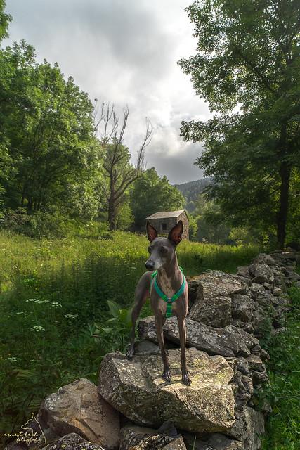 Happy aventures en el Torrent de Vall-Llobre