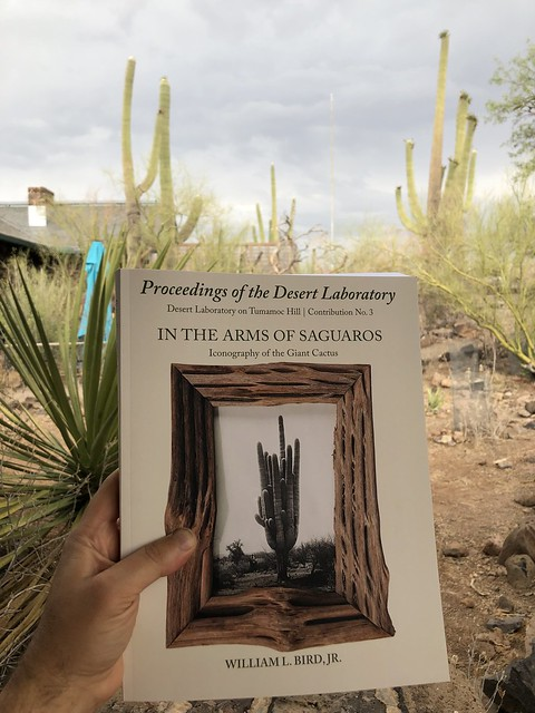 In the Arms of Saguaros: Iconography of the Giant Cactus