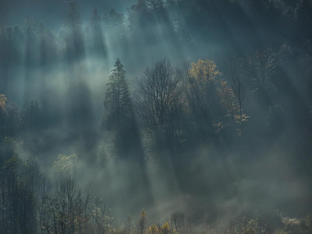 Brumes dans la forêt vosgienne... 51301952023_423b2ecf47_b