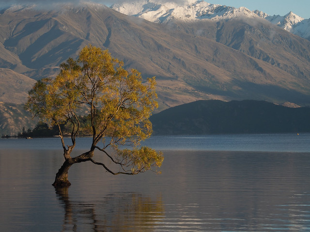That Wānaka Tree