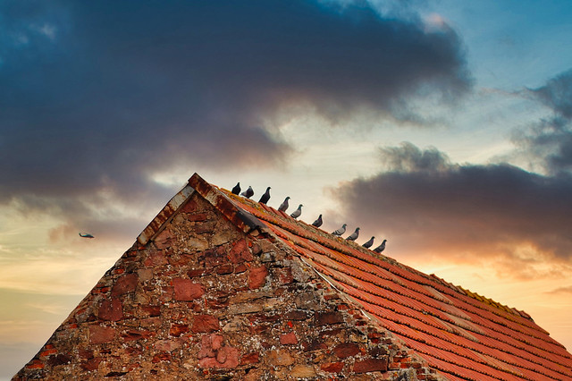 10 Pigeons Watching The Sunset (explored 11/07/21)