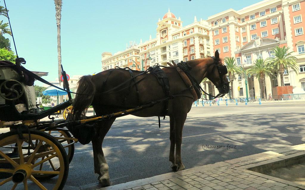EXPLORE: Jul-10- 2021 # 405 y el 144 de mi Galería. Málaga Centro!
