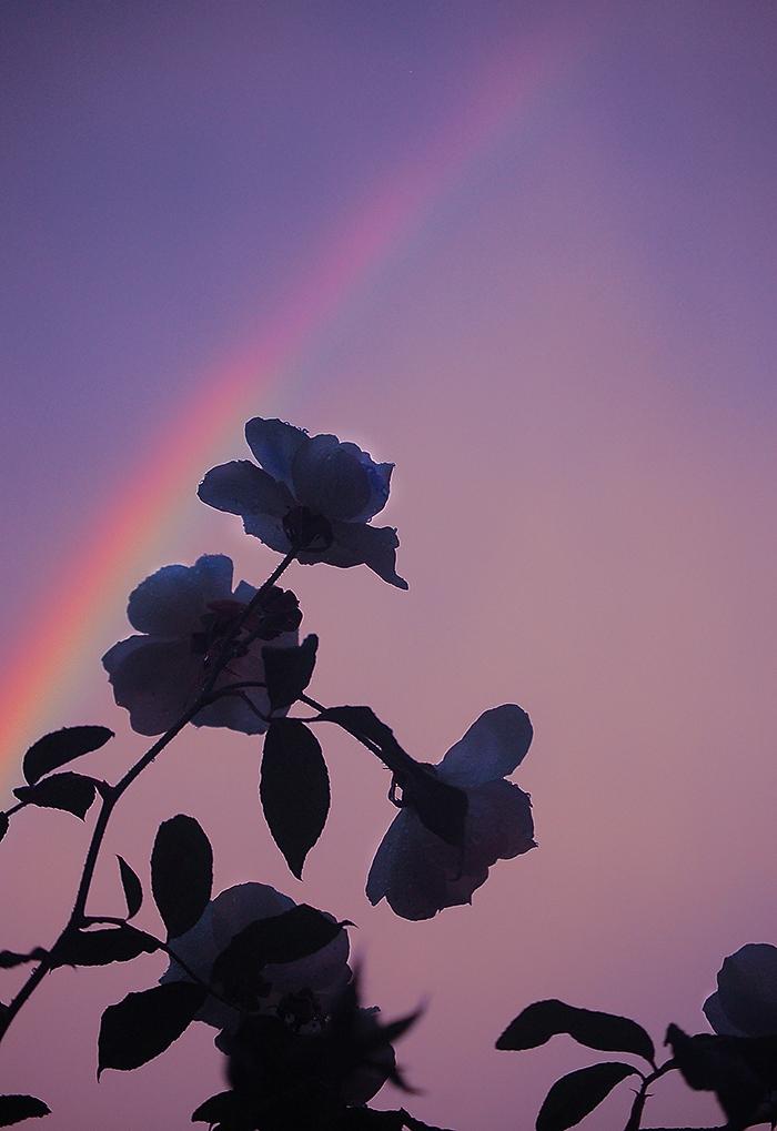 _roses_
