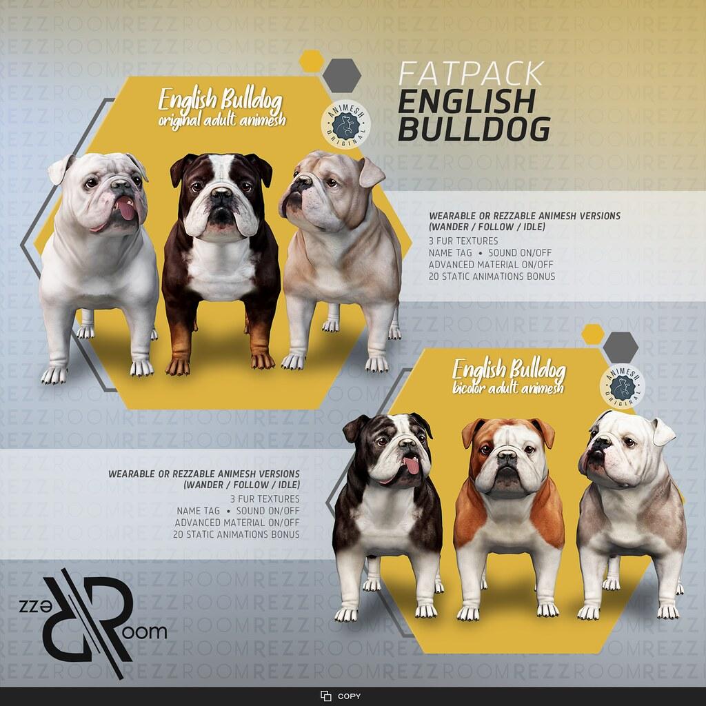 [Rezz Room] English Bulldog Adult Animesh (Companion)