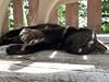 Martha #cat on the deck