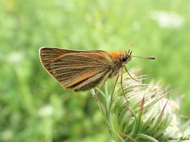 Butterfly 2028