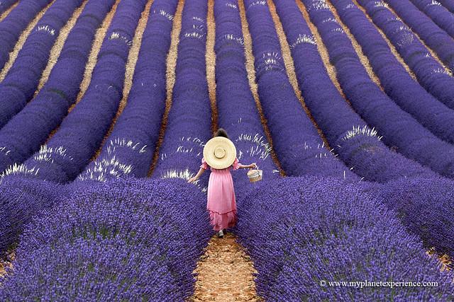 Lavender feelings...