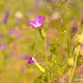 Macro Flower_00419
