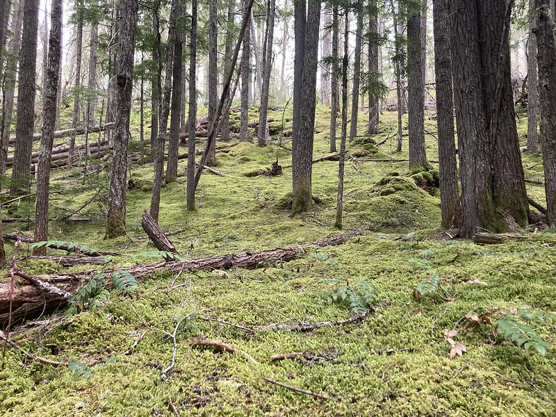 A soft mossy carpet blanketed the western part of the loop