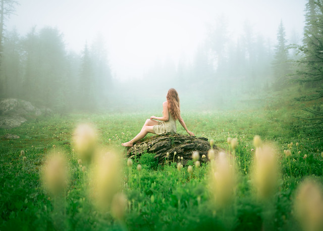Mystical Meadows