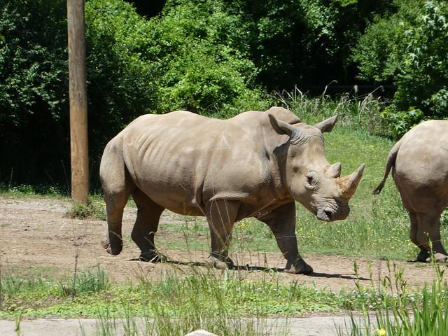 Nashville Zoo - Rhinoceros