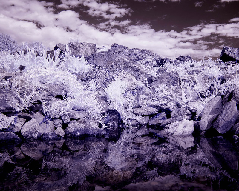 Infrared of the day 40