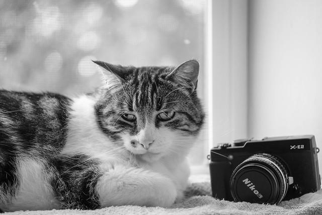 Cat tales from the windowsill...classic Nikon meets Fuji. #1