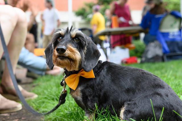 Bosco the Dog - Art Beat 2021