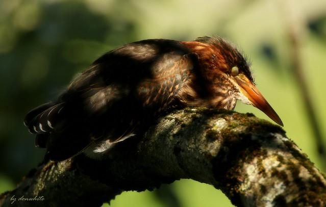 fledge break