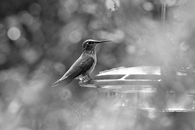 Hummingbird framed by bokeh