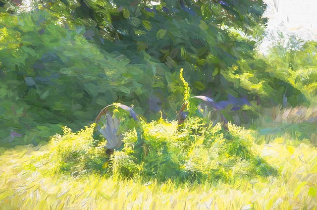 Summer Impression [Explore July 11, 2021]