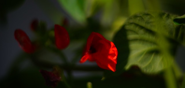 natural color from vintage lens without retouch