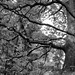 magic tree, austria, 2021