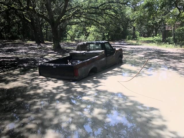 a most wonderful mud-puddle