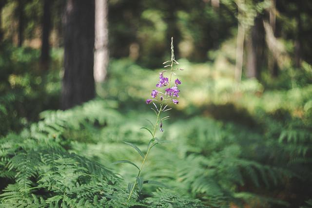 Snurr i skogen.