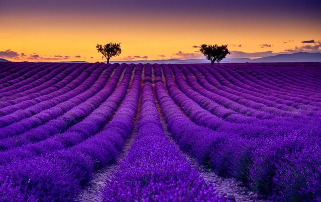 Valensole Lavendel Sonnenuntergang