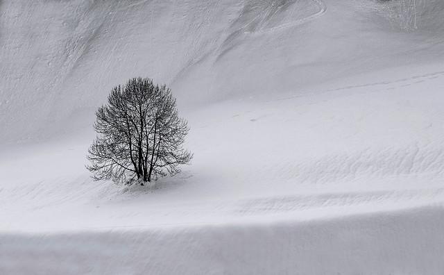 Tree mininal