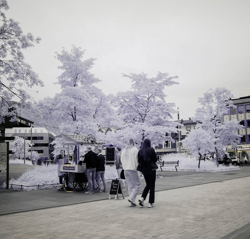 Infrared of the day 41