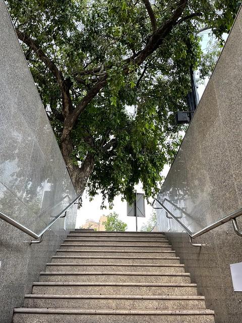 City Landmark - Jamun Tree, Connaught Place