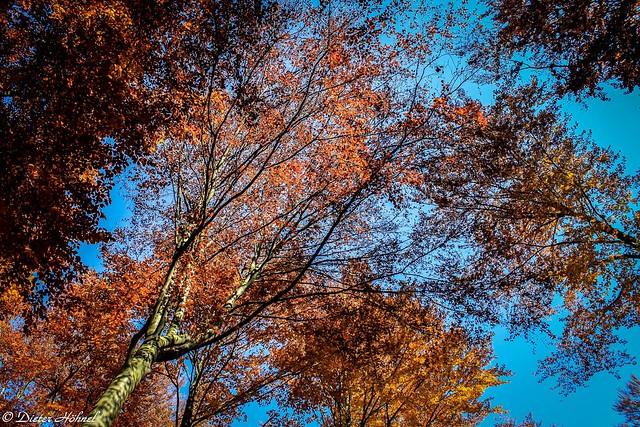 Herbstfarben im Blätterdach