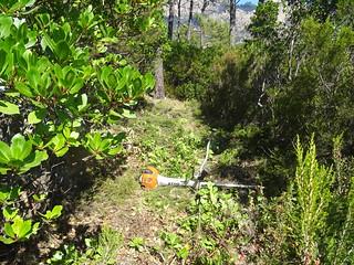 Chemin du Finicione RD : dans la montée vers le col 535m à Livisani