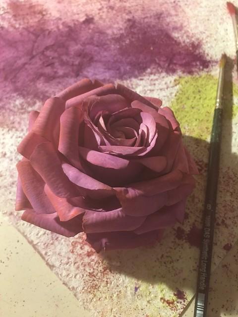 Dusting Sugar rose