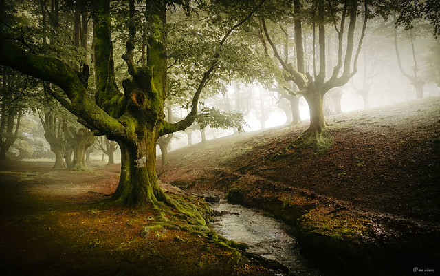 THE OLD FOREST...