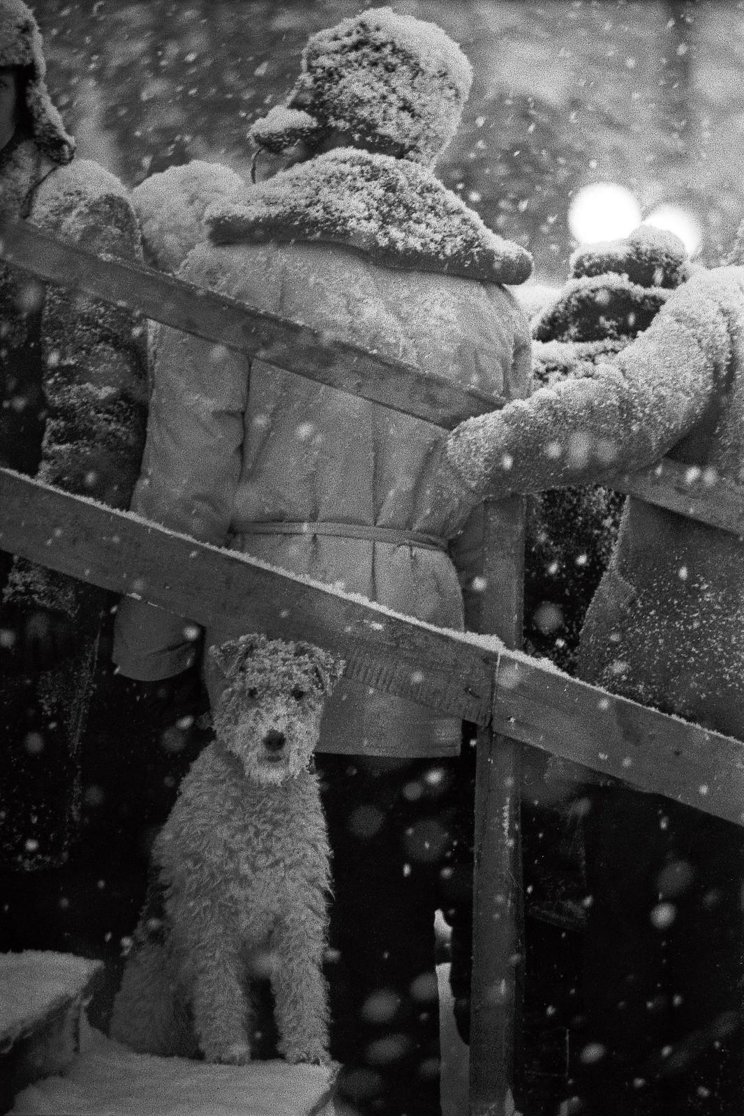 1965. «Не моё собачье дело»