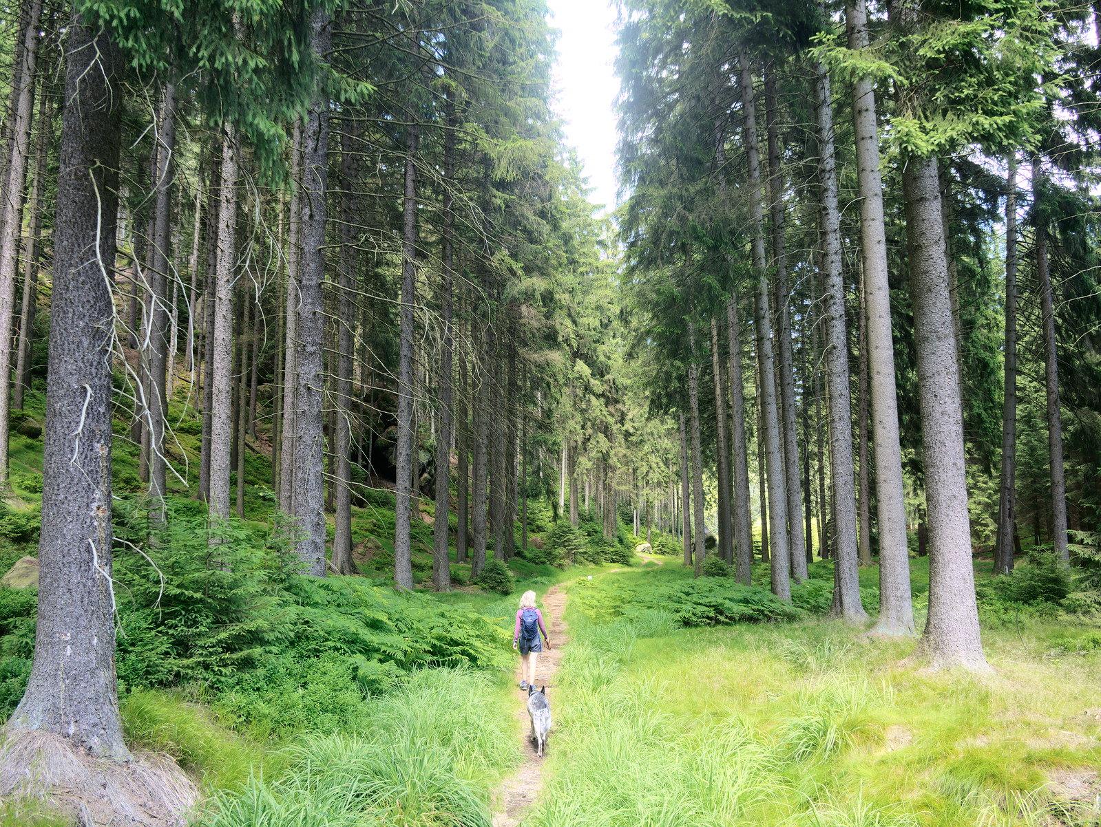 Lužické hory Zittauer Gebirge pies