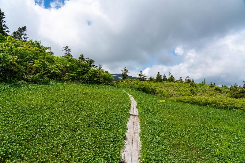 森吉山の湿原