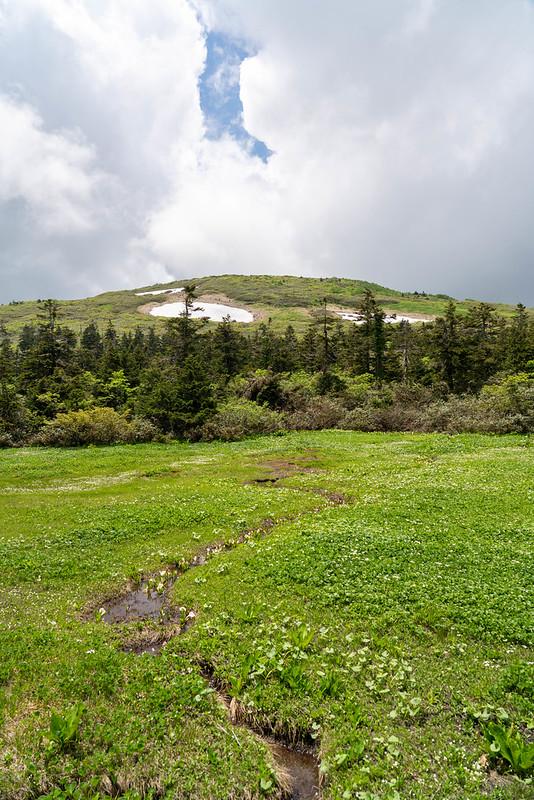 6月の森吉山
