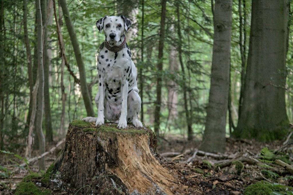 Im Wald.