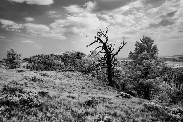 On Top of Red Mountain - IR
