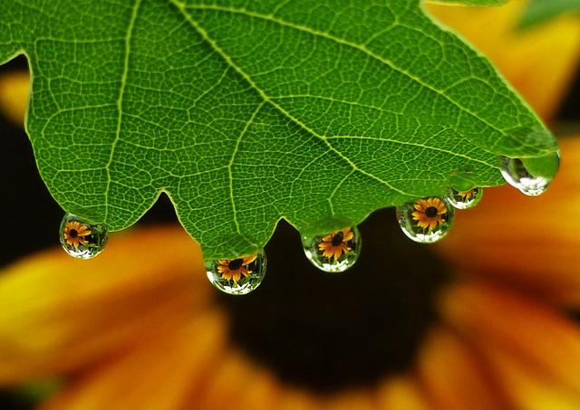 Underneath an Oak leaf..x