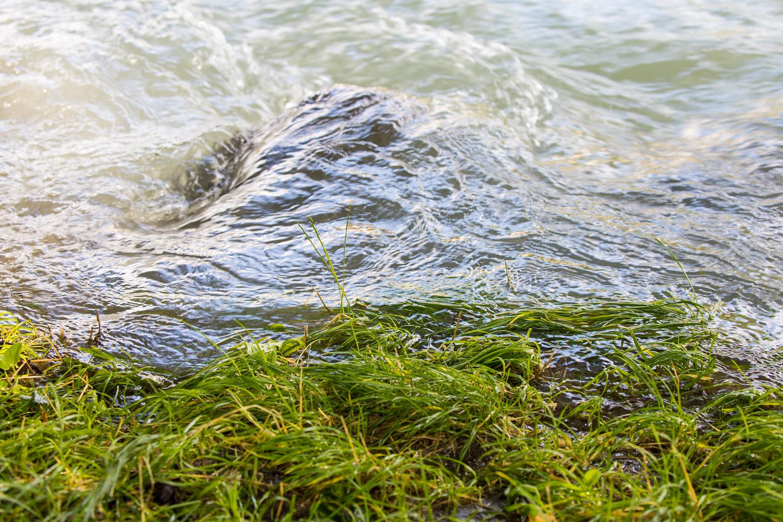 Hochwasser Bern 11.7 (7)