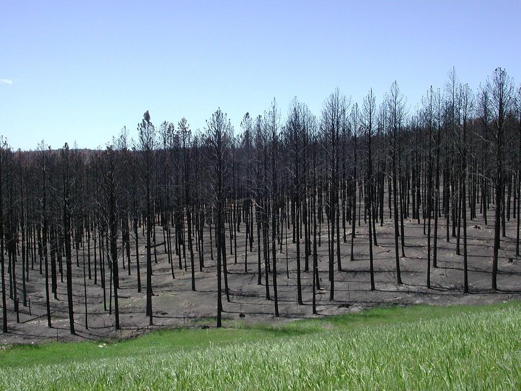 美國森林大火。圖片來源:U.S. Geological Survey(CC0 1.0)