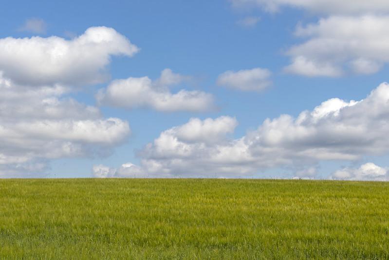 Fluffy Summer Clouds