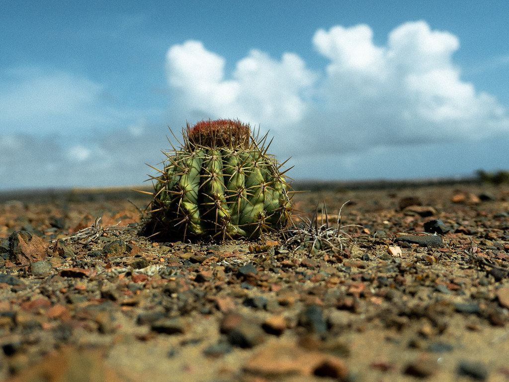 A cactus shot from the ground
