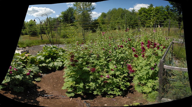 Our tangled garden -- Autostitch