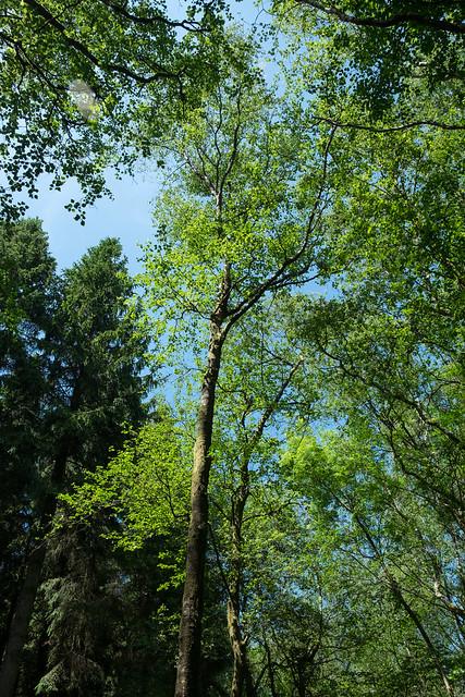 Harridge Woods