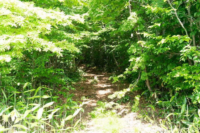 ヒバクラ登山口から森吉山